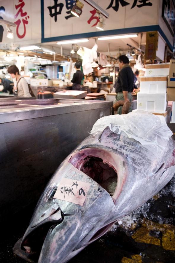 Tokyo Fish Market (1)