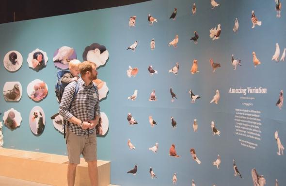 Natural History Museum of Utah, Darwin's Pigeons exhibition