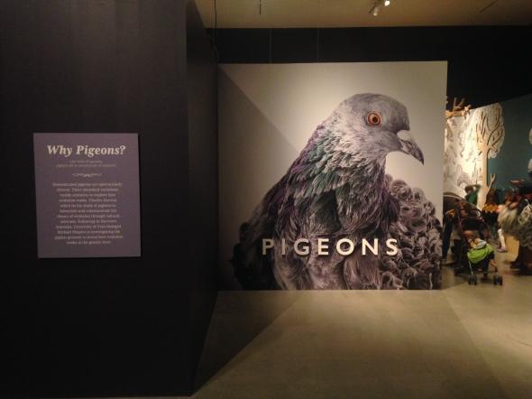 Natural Histroy Museum of Utah, Darwin's Pigeons exhibition