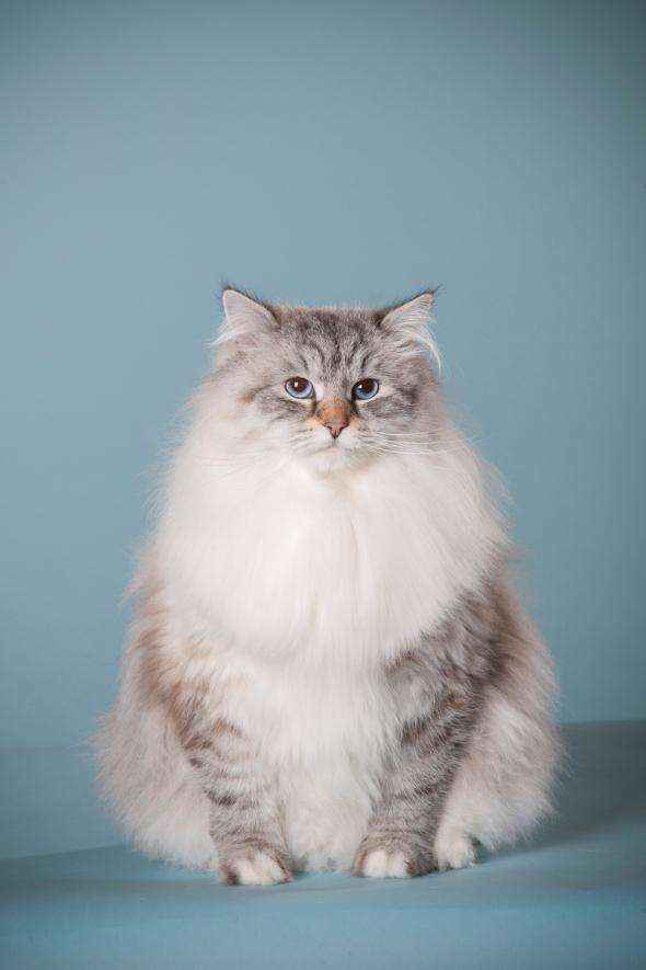studio portrait of a cat